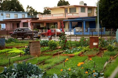 Ogródek warzywny i zabudowa PGR-u